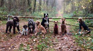 Travehunde Hundebetreuung